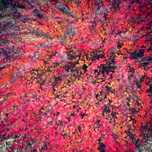 Fall has arrived in my front yard!