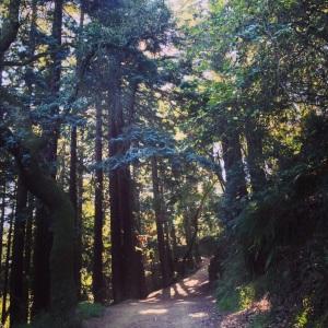 my walking meditation path